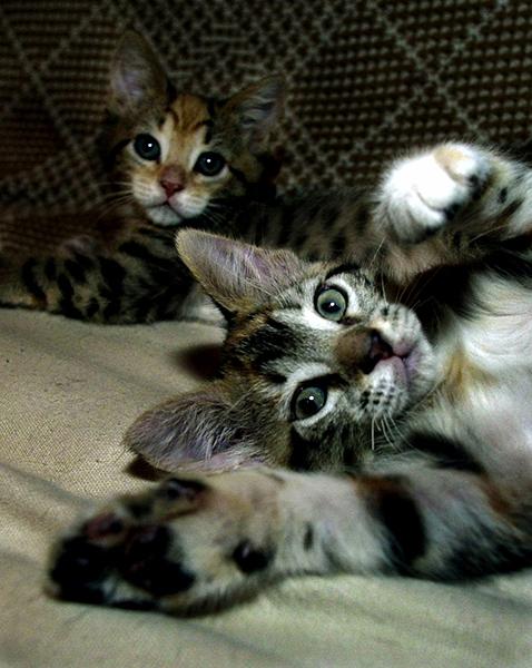 BOTH CATS DEN