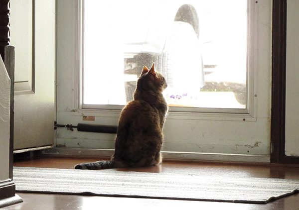 Cat March 26