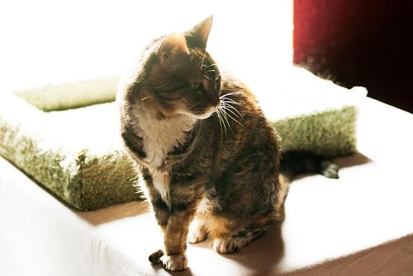 Cat Nov 9