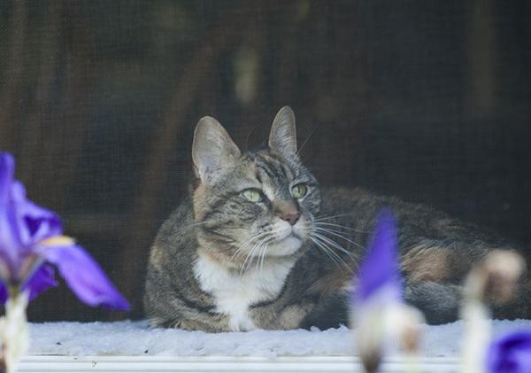 Cats May 15