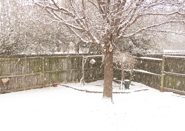 Snow Feb 12