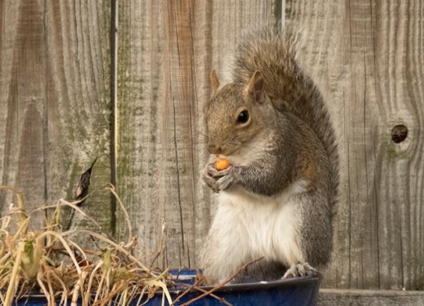 Squirrel Feb 20