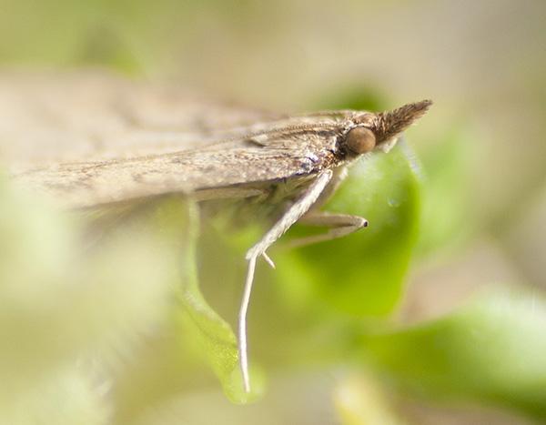 Moth March 10