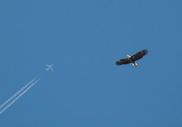 Eagle April 20