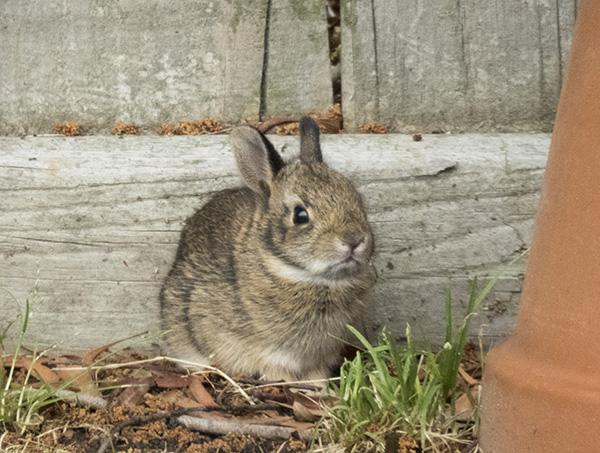 Rabbit Baby April 28
