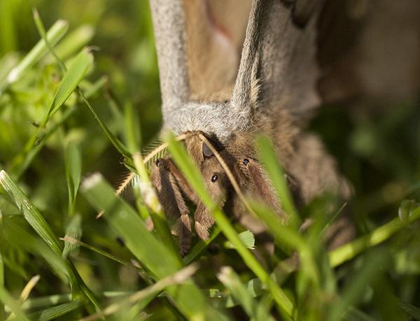 Moth May 3