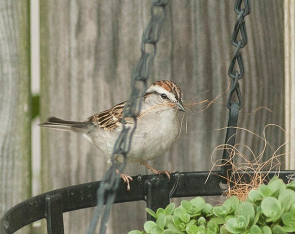 Sparrow May 3