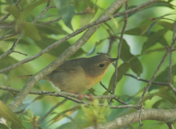Unknown Bird May 2