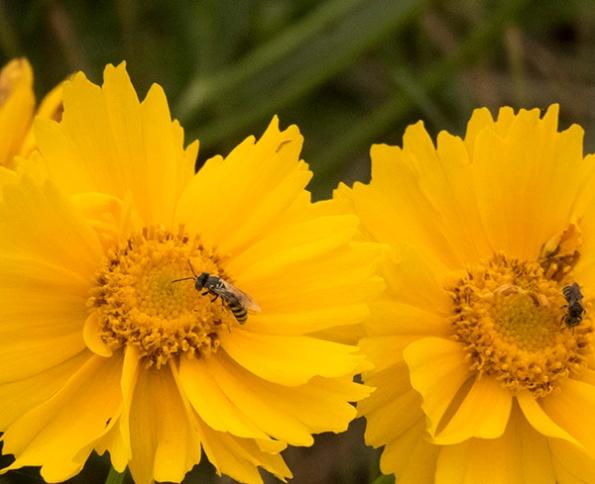 Bee June 2