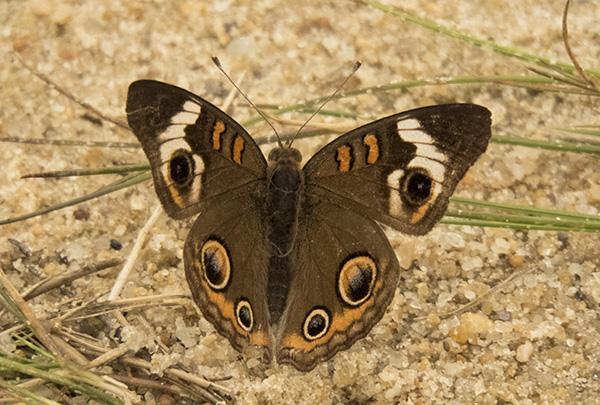 Butterfly June 2