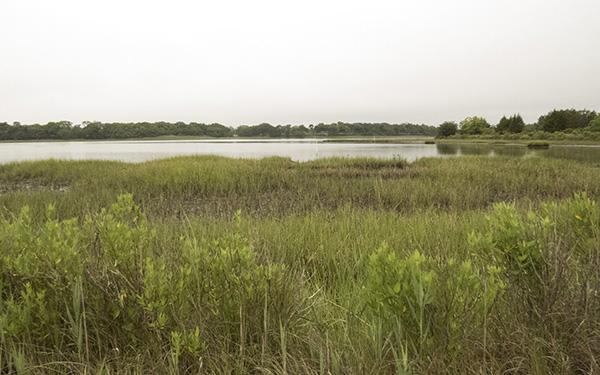 Landscape June 2