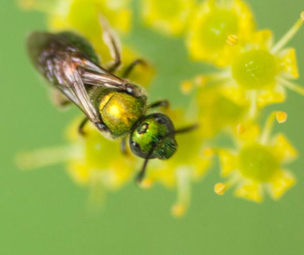 Bee July 16