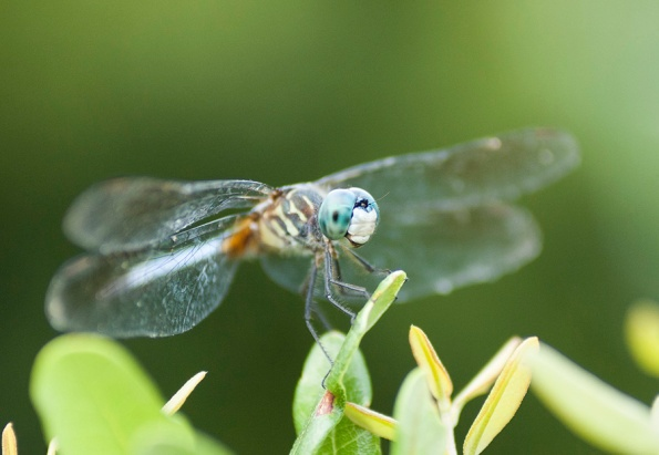 Dragonfly July 15