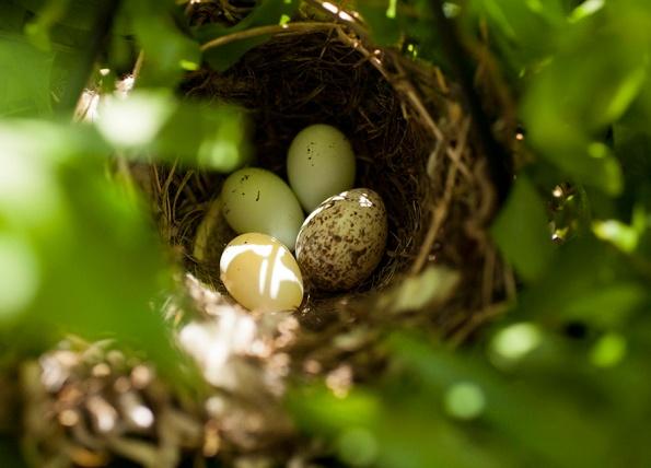 Eggs May 14