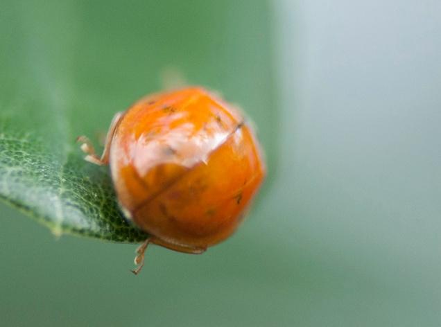 Ladybug July 15