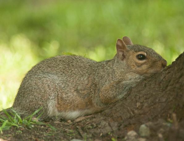 Squirrel May 2