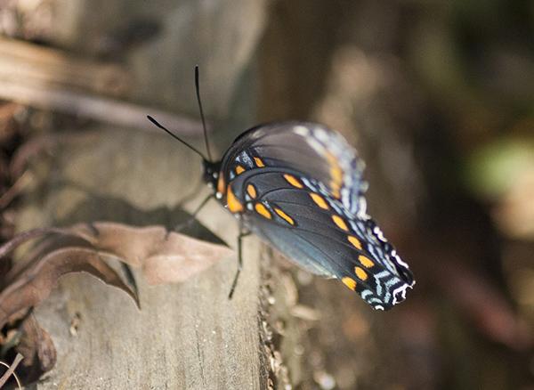butterfly-oct-22