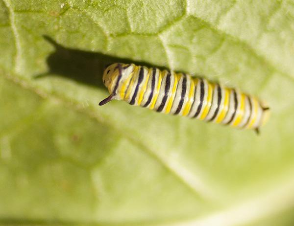 caterpillar-august-5