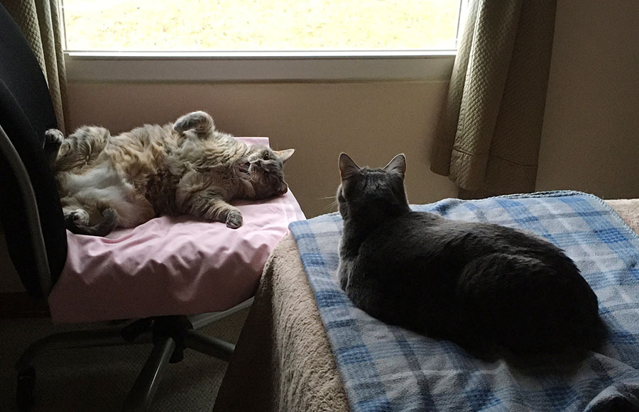 Marie, a pale gray watermarked tabby cat, is looking out of the window from her perch on a flannel blanket at the foot of a bed. Duchess, a pale gray and orange tortoiseshell cat, is sprawled in her back, yawning, in a chair in front of the window.