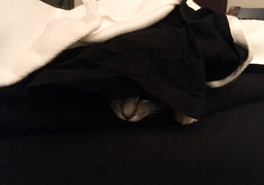 A gray cat, Marie, is mostly hidden under a black sheet and white blanket. All that can be seen is her nose and part of one eye, along with a few toes of one front foot. Her position and tension indicate that she is stalking something from her hiding place under the sheet and blanket.