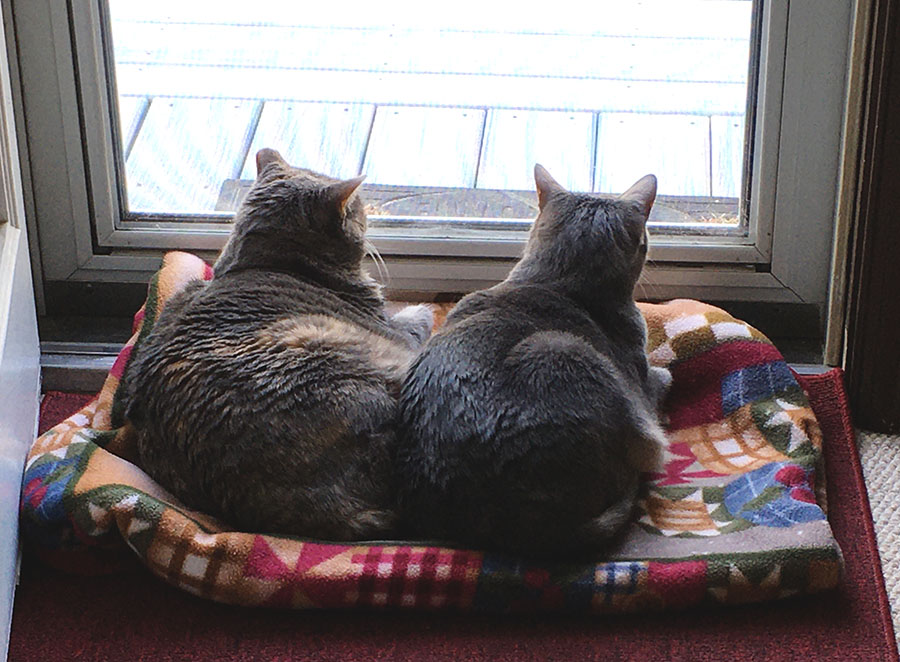 Two cats, Marie and Duchess, are curled up together on a brightly colored blanket on the floor in front of a glass door. Their backs are to the camera, and they are looking outside.